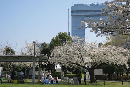 写真:桜の下でバーベキュー