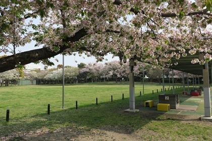 写真:バーベキュー場の前に広がる芝生の中公園