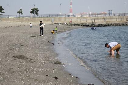 写真:かわさきの浜で潮干狩り