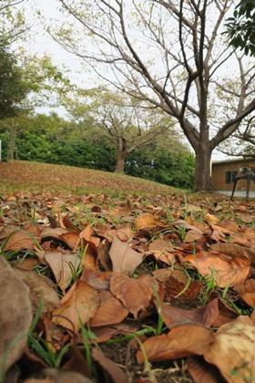 写真:落ち葉