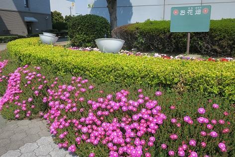 写真/お花畑2