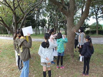 野鳥樹木観察2020